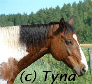 american paint horse 01 - 001.jpg